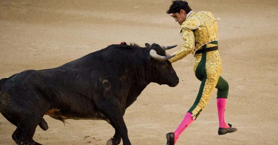 Spanish novillero bullfighter Victor Barrio is chased by a bull during a bullfight of the San Isidro's fair at the Las Ventas Bullring in Madrid, Monday, May 16, 2011. Novilleros, is the stage prior to becoming a 'matador' where bullfights are performed with young bulls. Bullfighting is an ancient tradition in Spain and the season runs from March to October. (AP Photo/Daniel Ochoa de Olza)